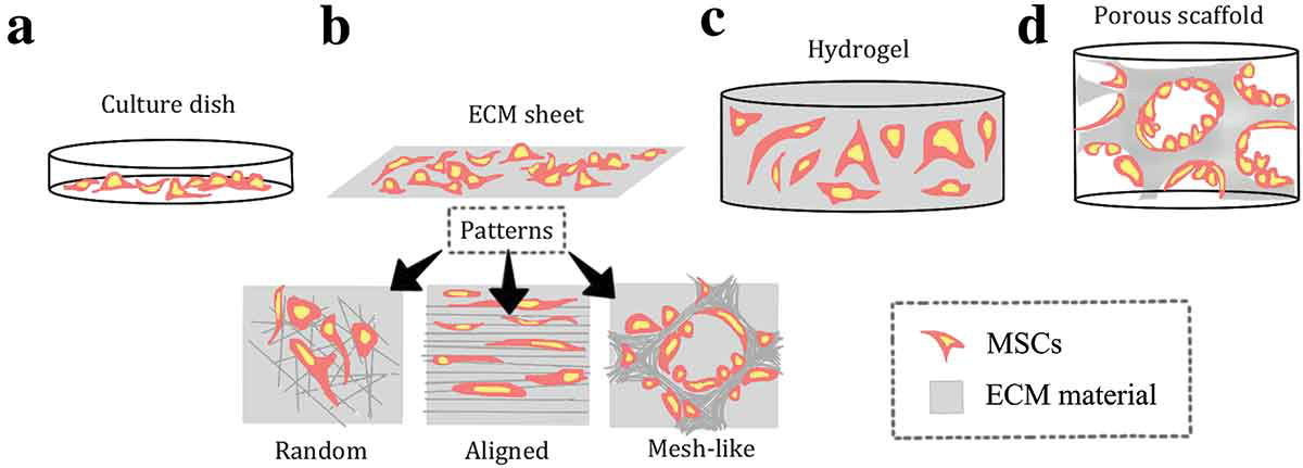 The different forms of an extracellular matrix and their interactions with the cells